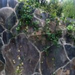 Laja Arqueologica