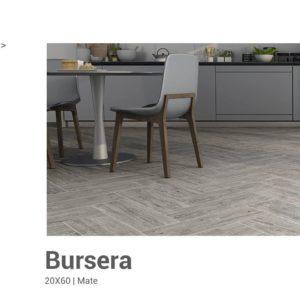 Bursera